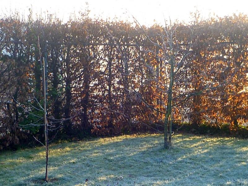 Mon jardin de fées (Chez Anne-Cécile) au fils du temps... P1010811