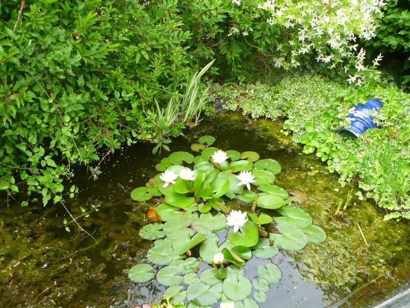 Mon jardin de fées (Chez Anne-Cécile) au fils du temps... P1020410