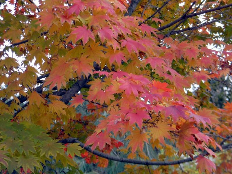 Les feuillages d'automne 26_oct10