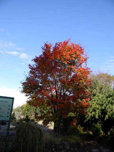 Les feuillages d'automne 26_oct11