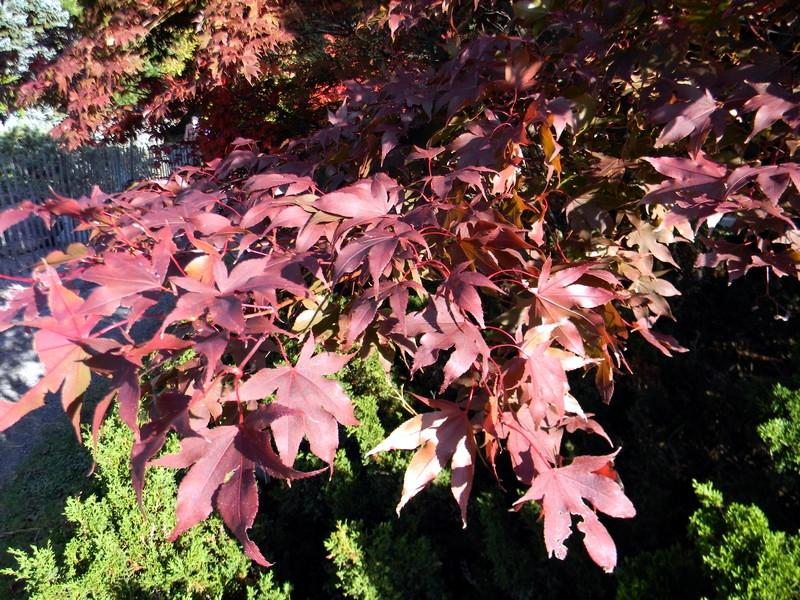 Les feuillages d'automne 26_oct12