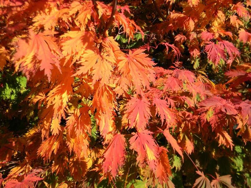 Les feuillages d'automne 26_oct14