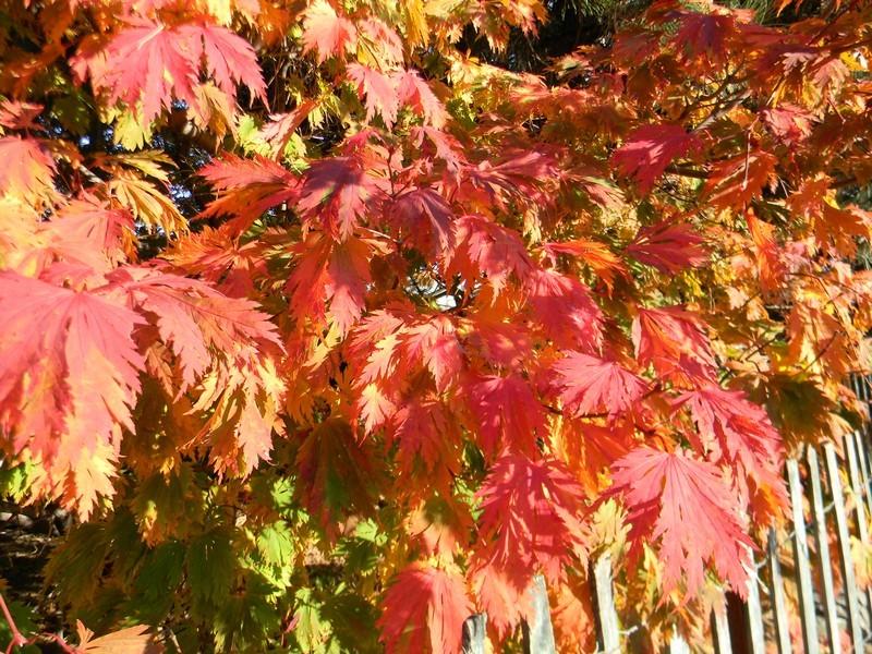 Les feuillages d'automne 26_oct15