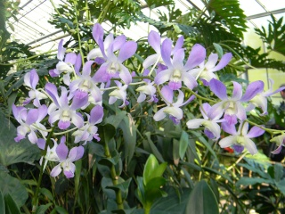 Fleurs du jardin botanique de Montréal Dscn5510