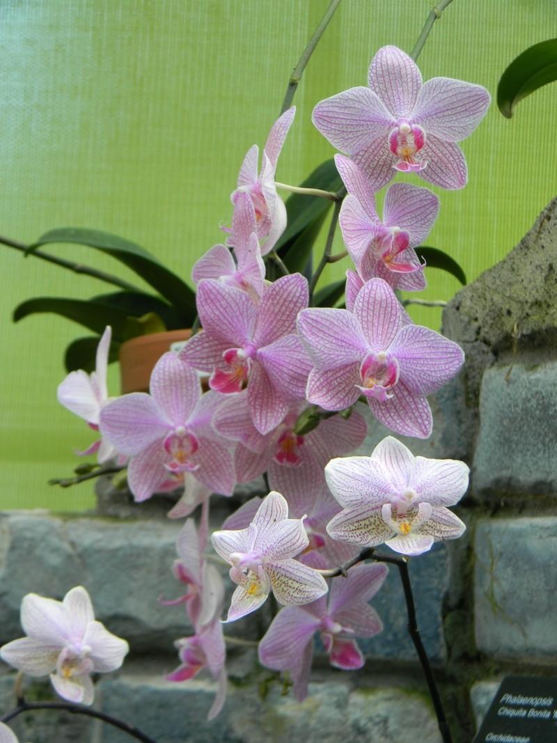 Fleurs du jardin botanique de Montréal Dscn5513