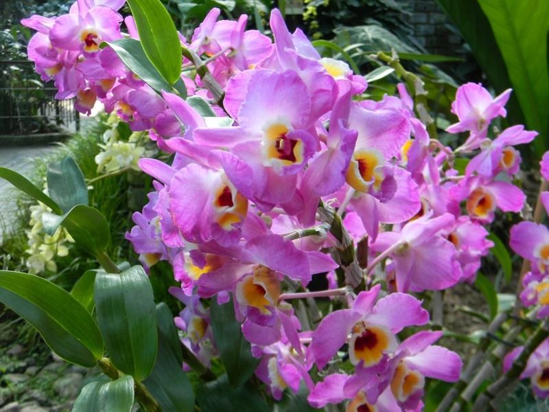 Fleurs du jardin botanique de Montréal Dscn5611