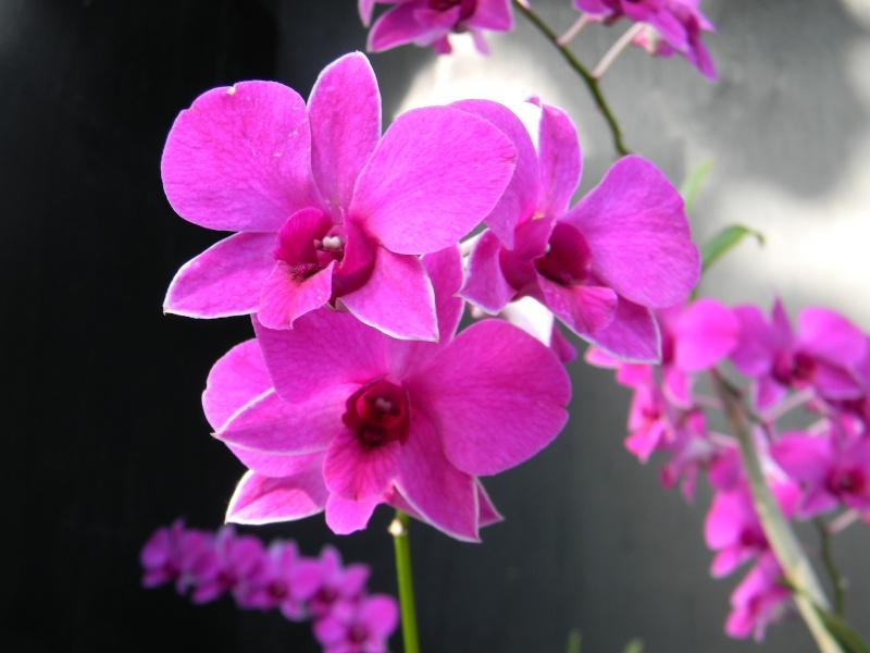 Fleurs du jardin botanique de Montréal Dscn5612