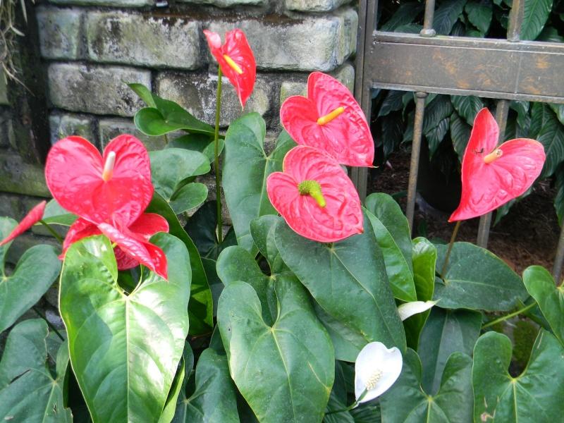 Fleurs du jardin botanique de Montréal Dscn5810