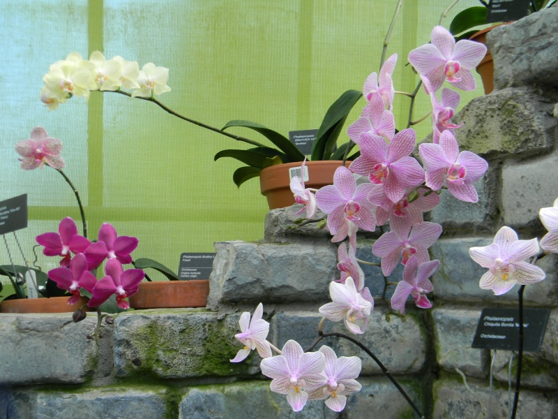 Fleurs du jardin botanique de Montréal Dscn5811