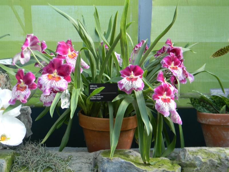 Fleurs du jardin botanique de Montréal Dscn5812