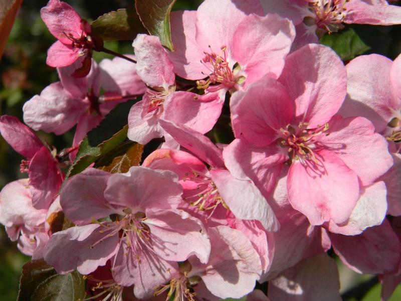 Fleurs du jardin botanique de Montréal Dscn6110