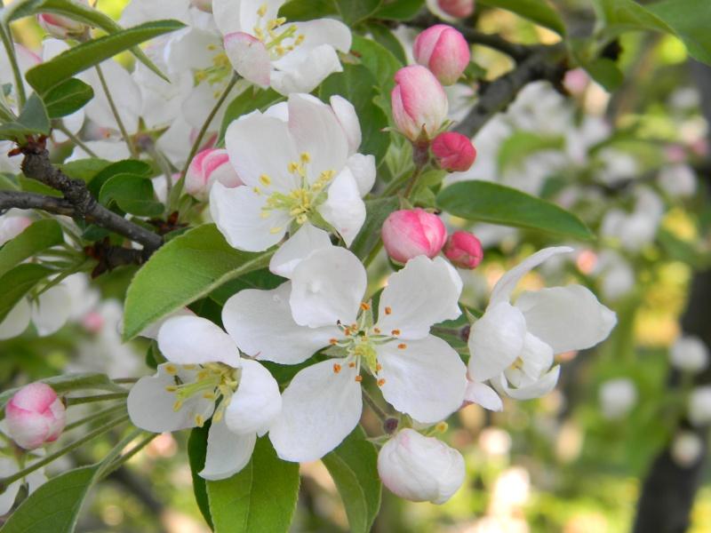 Fleurs du jardin botanique de Montréal Dscn6210