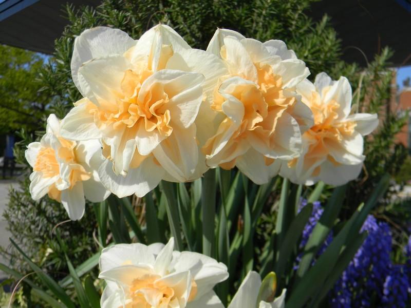D'autres fleurs Dscn6310