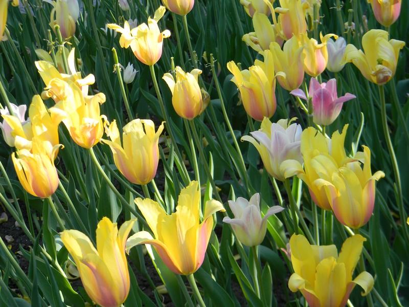 D'autres fleurs Dscn6410