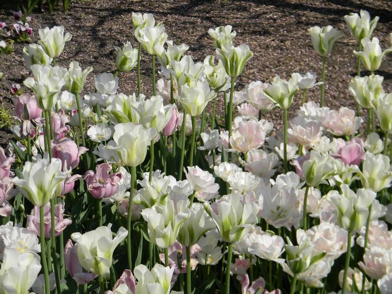 D'autres fleurs Dscn6411