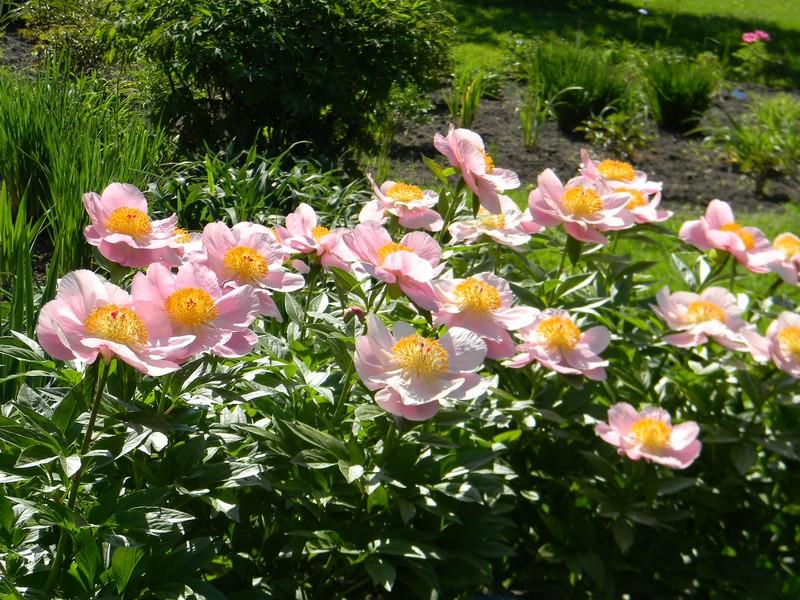 D'autres fleurs Dscn6610