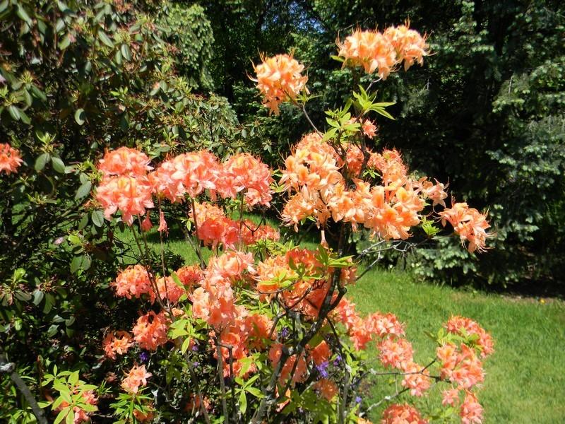 D'autres fleurs Dscn6810