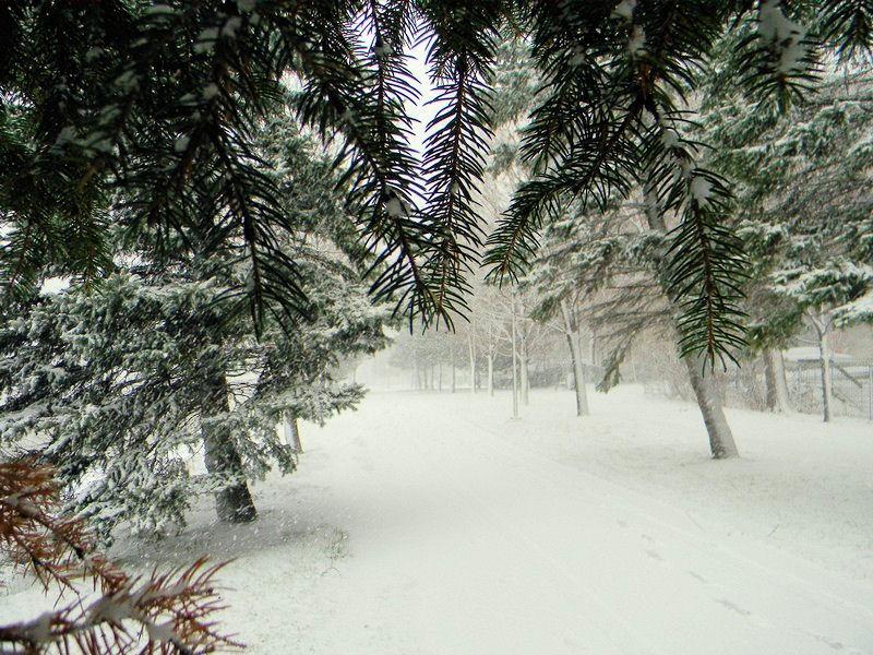 Photos de neige Neige311