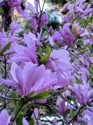 Fleurs du jardin botanique de Montréal Untitl11