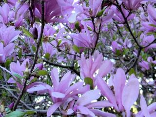 Fleurs du jardin botanique de Montréal Untitl12