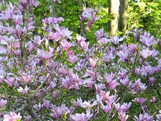 Fleurs du jardin botanique de Montréal Untitl15