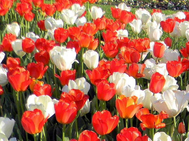Fleurs du jardin botanique de Montréal Untitl18