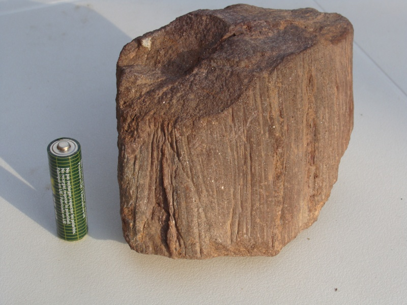 Sauvez les troncs ! Dsc02310