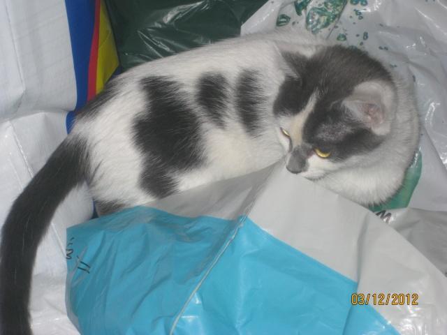 YUMALA, chatonne de 6 mois à l'adoption (77) -F-R-VV-LBC Yumala11