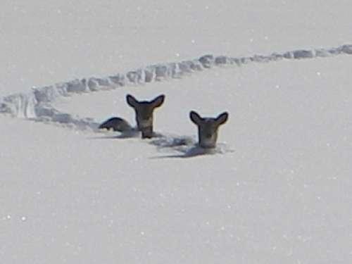 Youpi !! il neige! - Page 2 Bambin11