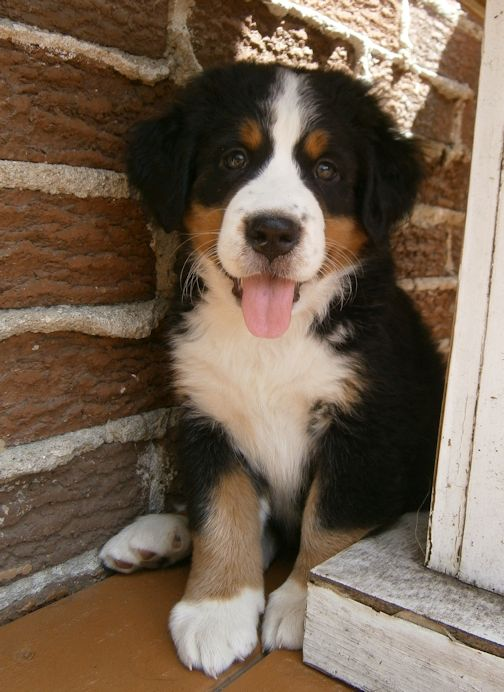 ma chienne ... - Page 4 Hamber11