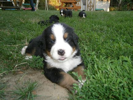 ma chienne ... - Page 4 Tony110