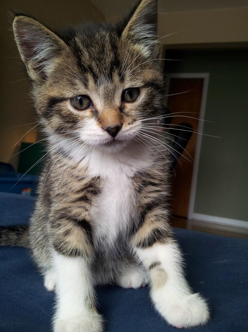 Famille d'accueil pour deux chatons - SPCA Montréal - Page 2 2012-010