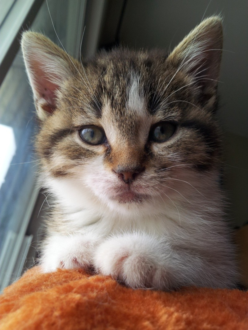 Famille d'accueil pour deux chatons - SPCA Montréal - Page 2 2012-011