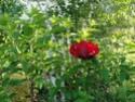 Le jardin du Clos Ballot Dsc02230