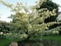 Le jardin du Clos Ballot Dsc02235