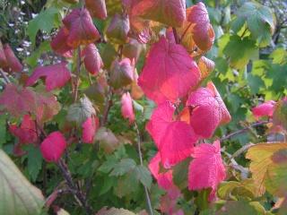 Feuillages d'automne - Page 2 Pict0838