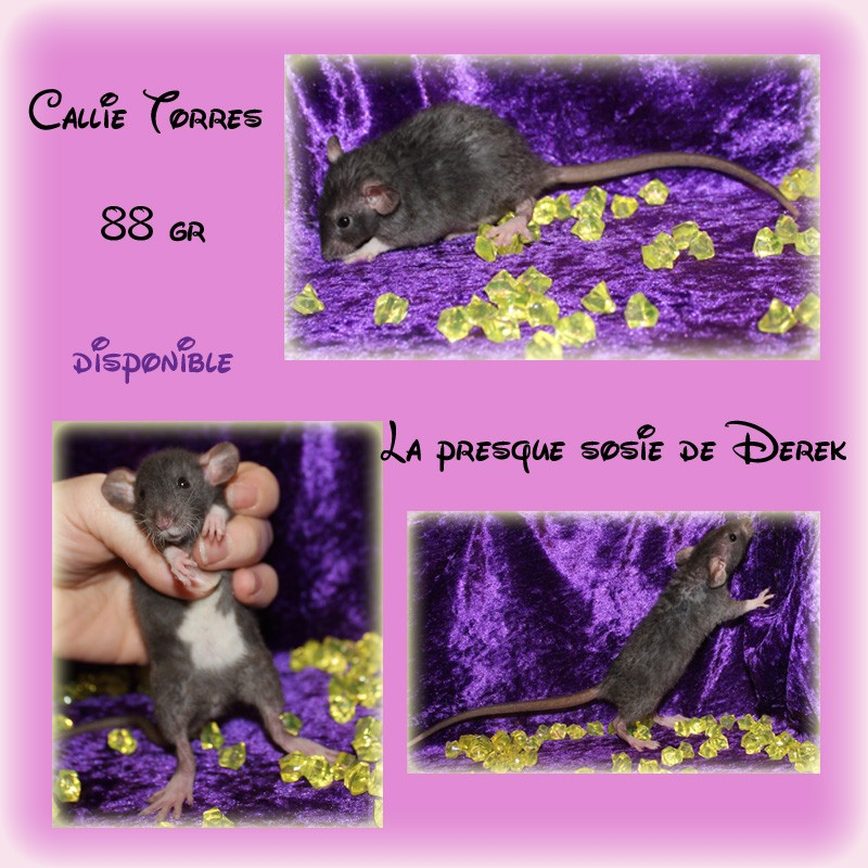 portée accidentelle LCN Ebène - Page 19 Callie28