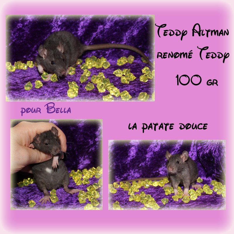 portée accidentelle LCN Ebène - Page 19 Teddy15