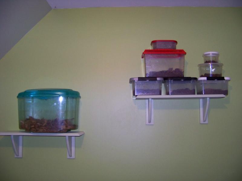 Mes installations à Scolopendra cingulata 100_7810