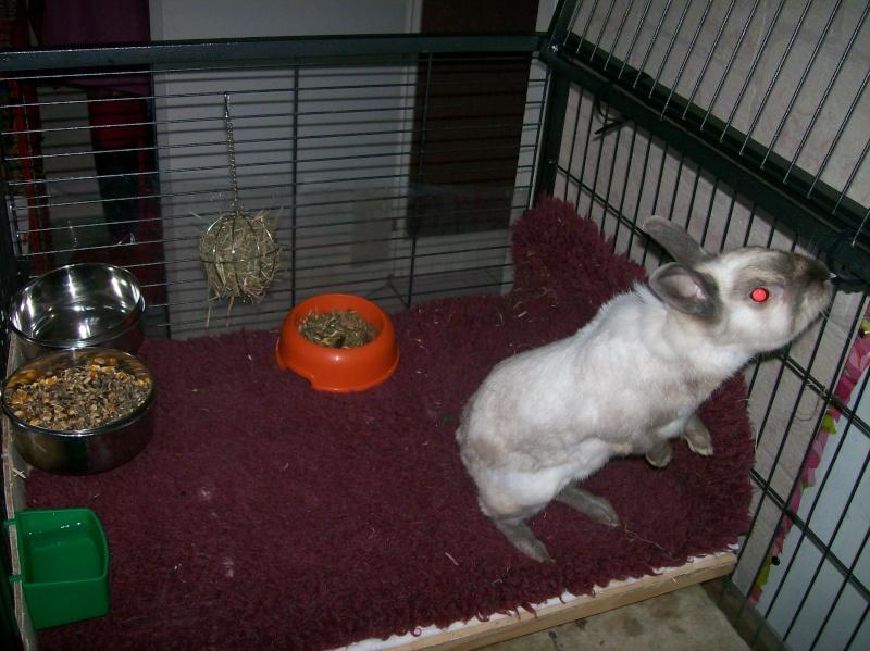 Aménagement de la maison de Prunelle, mon lapin 100_2229