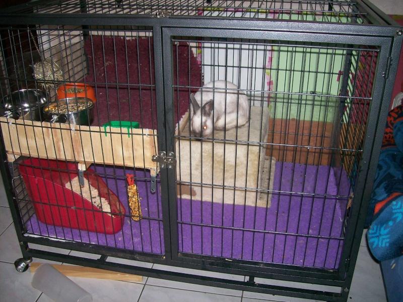 Aménagement de la maison de Prunelle, mon lapin 100_2230