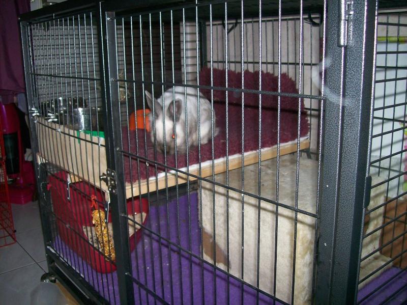 Aménagement de la maison de Prunelle, mon lapin 100_2231