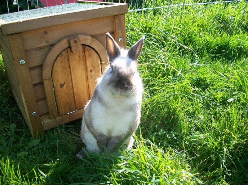 Aménagement de la maison de Prunelle, mon lapin 100_2919