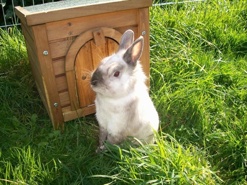 Aménagement de la maison de Prunelle, mon lapin 100_2920