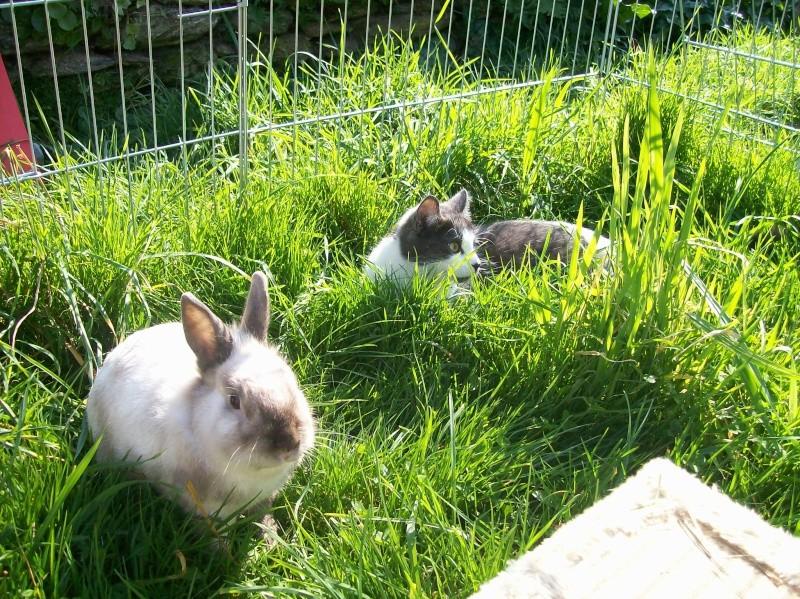 Aménagement de la maison de Prunelle, mon lapin 100_2922