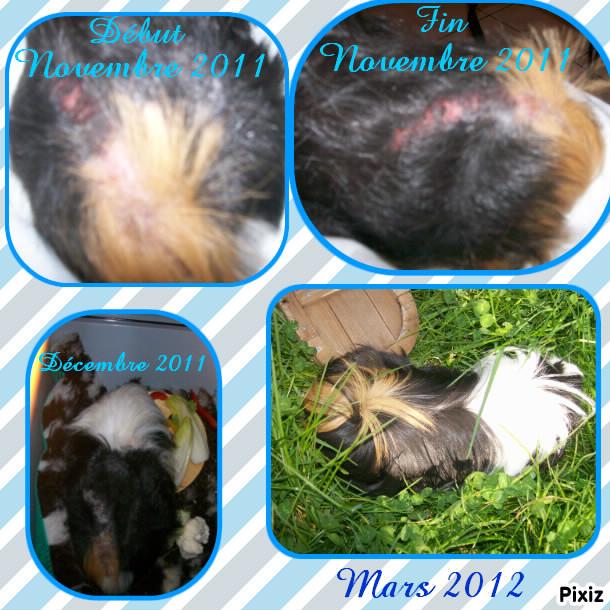 Carnet de santé de Lily  au 01/06/16 /////////et Fleur au 23/01/16 // Lucky, Jack, Ninile - Page 5 Photoc11