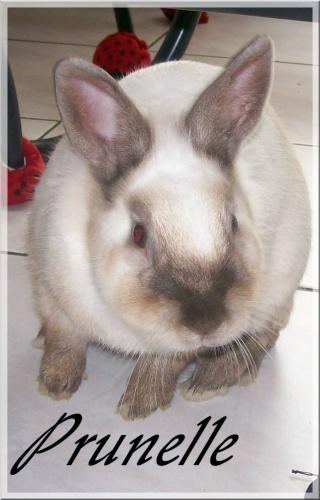 Aménagement de la maison de Prunelle, mon lapin Prunel12