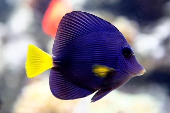 Quel poisson rêvez-vous de possèder? Image10