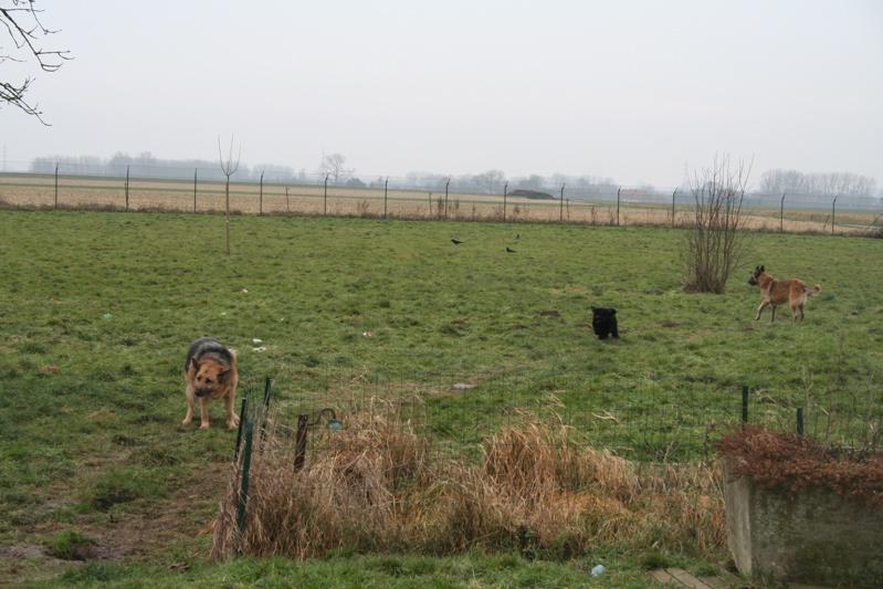 Parrainer les GEANTS  du refuge des petits vieux  (Belgique) Img_5212