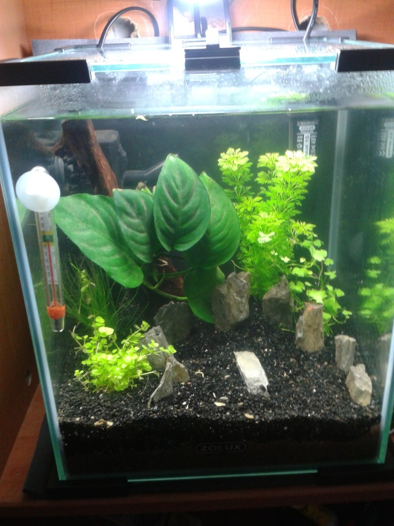 Le nano de paulo !  20L Blue Pearl !  2012-112
